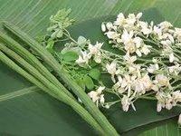 Moringa Dry Leaf