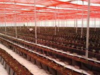 Hydroponic Greenhouse Supplies