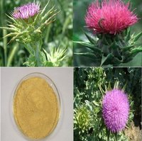 70%, 80%, 95%, 98% Milk Thistle Extract