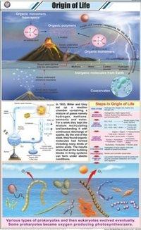 Origin Of Life Chart