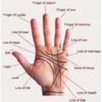 Palmistry Services
