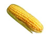 Maize Corn