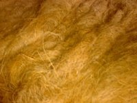 Coconut Coir Fiber