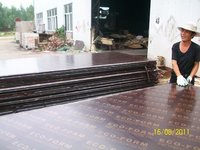 Brown Film Faced Plywood AAA Grade (CM 016)