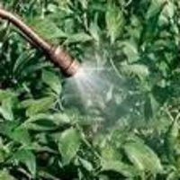 Foliar Spray Fertilizer