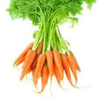 Pure Carrot Seed Oil