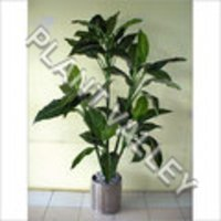 Artificial Green Plant Caladiume