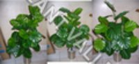 Artificial Split Pillow Plant