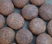 Areca Nuts