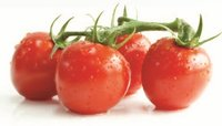 Tomato Paste (H.B)