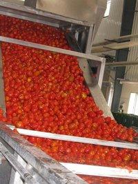 Tomato Paste (C.B)
