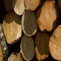 Round Logs And Sawn Timber