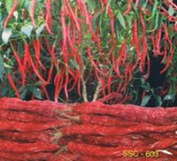 Organic Red Chilli Seed