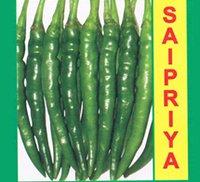Organic Chilli Seed