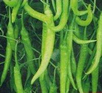 Organic Chilli Seeds