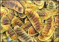 Best Quality Seena Pods
