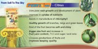 Fertis-WG For Citrus