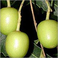 Organic Neem Products