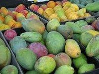 Mango Paclobutrazol