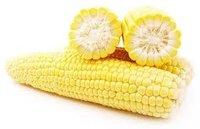 Animal Feed Yellow Corn