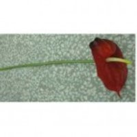 Artificial Single Stem Flower (77PVC004)