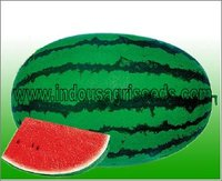 Watermelon Hybrid Seeds