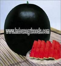 Round Watermelon Hybrid Seeds