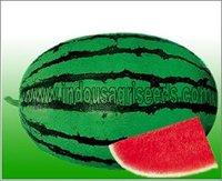Fruit Hybrid Seeds
