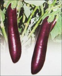 Brinjal Seeds (Ppl-74)