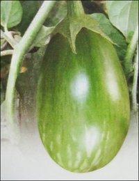Brinjal Seeds (No 801)