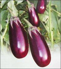 Brinjal Seeds (No 41)