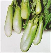 Brinjal Seeds (No 132)