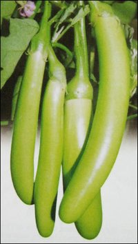 Green Long Brinjal Seeds (No 183)
