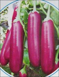Brinjal Seeds (No 704)