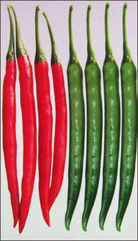 Chilli Seeds (Sungro Wonder)
