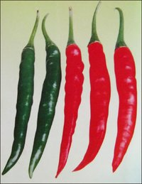 Chilli Seeds (S-86235)