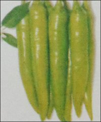 Hybrid Green Chilly Seeds (Bhalga)