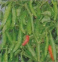 Hybrid Green Chilly Seeds (Pratap)