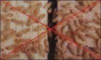 Termiteproof Compound