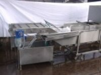 Veg Washer Cum Sorting Conveyor