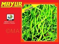 Chilli Seeds 1109