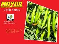 Mayur Hybrid Chilli - 1303 Seeds