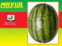 Mayur Hybrid Watermelon Seeds