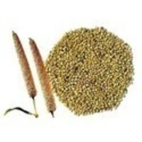 Whole Green Millet Seeds