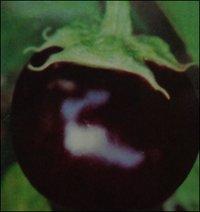 Round Brinjal Seeds