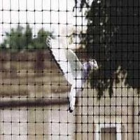 Durable Pigeon Protection Net