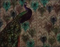 Peacock Design Wall Covering Wallpaper