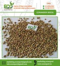 Green Yellow Coriander Seeds