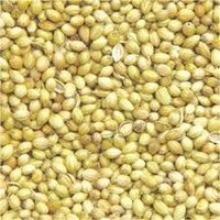 Whole Coriander Seeds