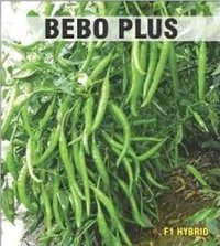 Bebo Plus Chilli Seeds